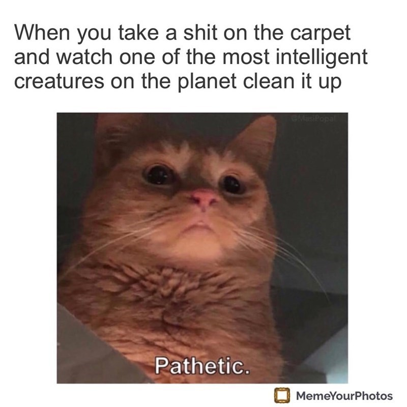 Cat - When you take a shit on the carpet and watch one of the most intelligent creatures on the planet clean it up GMasiPopal Pathetic. MemeYourPhotos