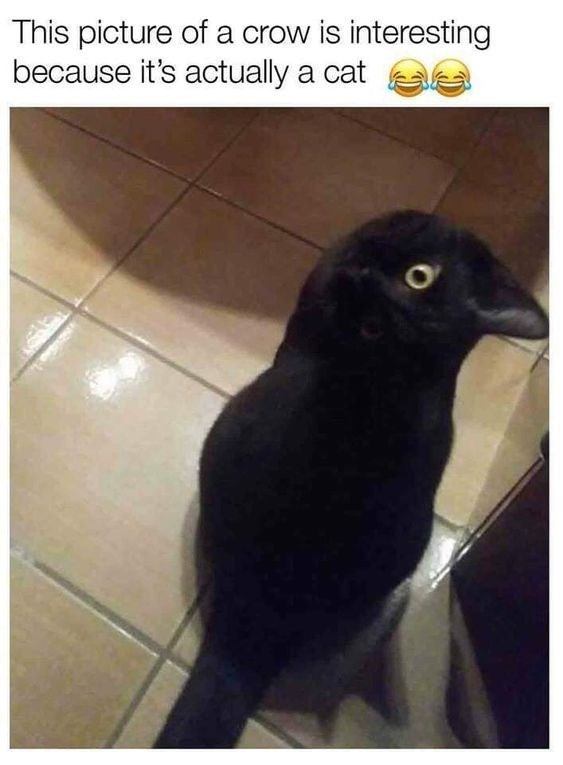 Bird - This picture of a crow is interesting because it's actually a cat