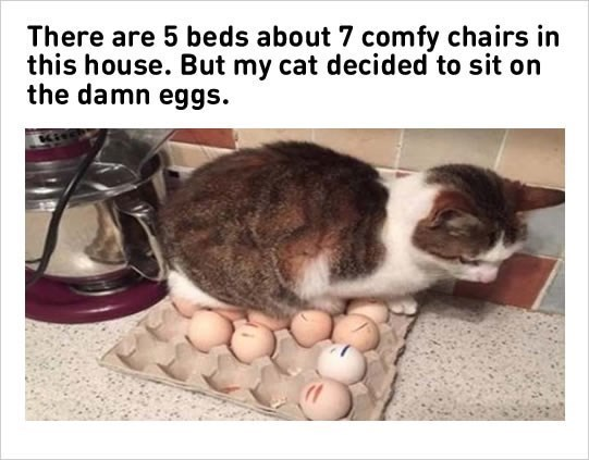 Cat - There are 5 beds about 7 comfy chairs in this house. But my cat decided to sit on the damn eggs.
