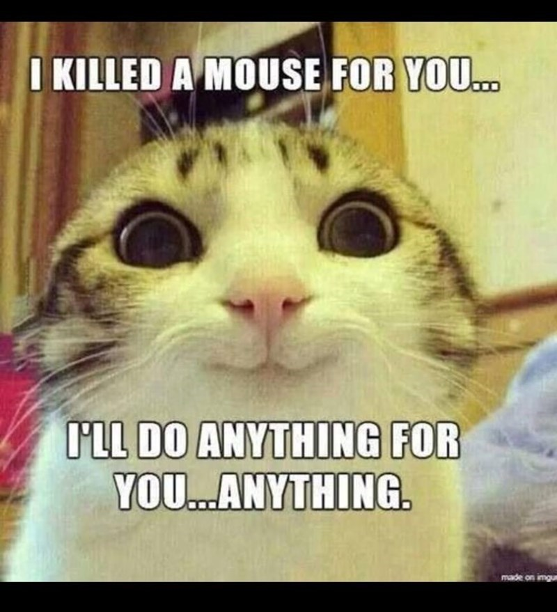 Photo caption - I KILLED A MOUSE FOR YOU. I'LL DO ANYTHING FOR YOU.ANYTHING. made on imgu