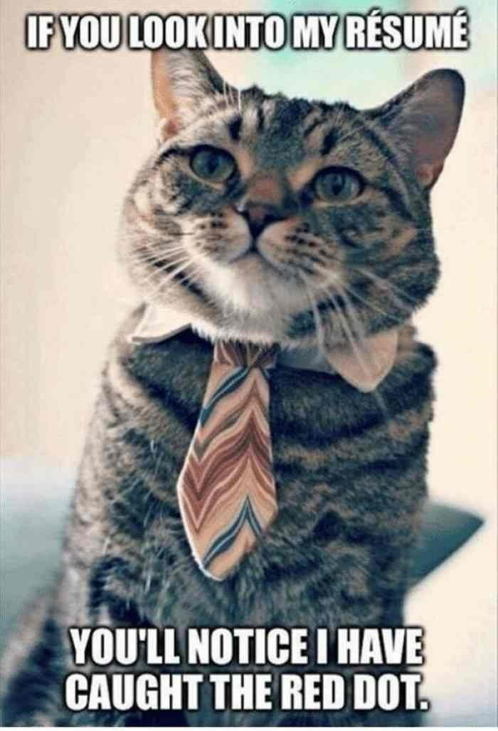 Cat - IFYOU LOOK INTO MY RÉSUMÉ YOU'LL NOTICE I HAVE CAUGHT THE RED DOT.