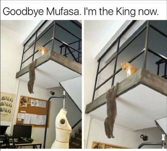 Property - Goodbye Mufasa. I'm the King now.