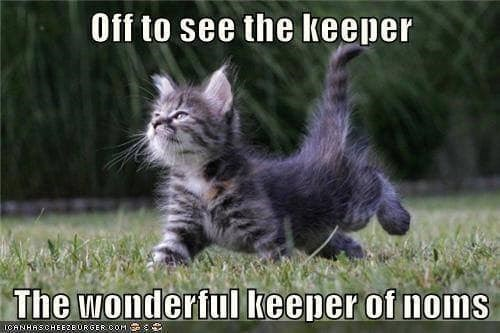 Cat - Off to see the keeper The wonderful keeper of noms IOANHASCHEEZEURGER COH