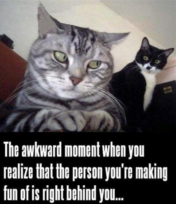 Cat - The awkward moment when you realize that the person you're making fun of is right behind you.