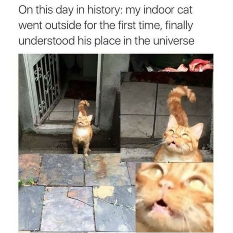 Text - On this day in history: my indoor cat went outside for the first time, finally understood his place in the universe STES