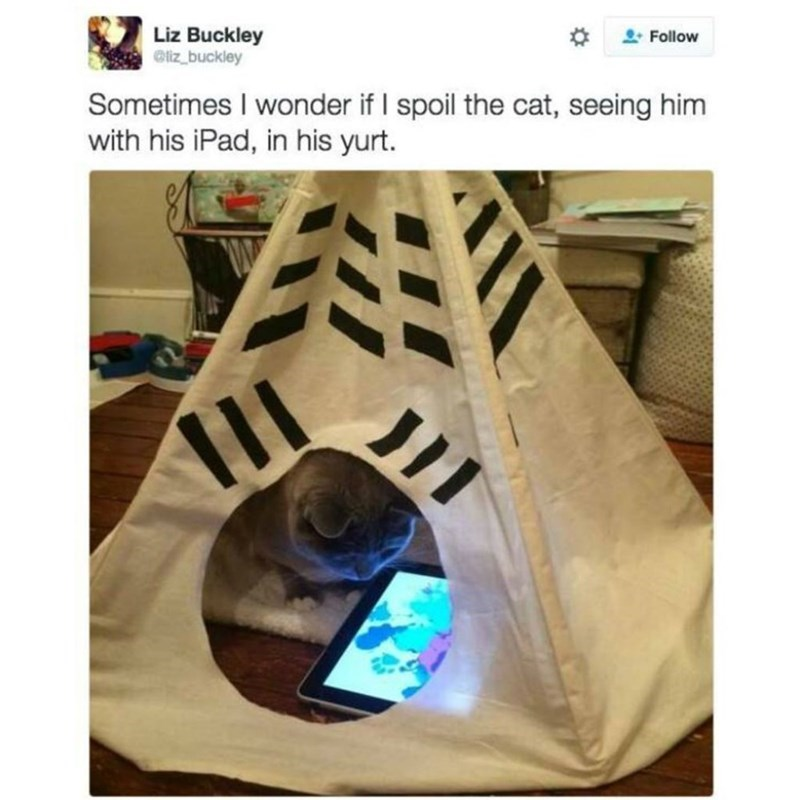 Product - Liz Buckley Oliz_buckley %23 Follow Sometimes I wonder if I spoil the cat, seeing him with his iPad, in his yurt.