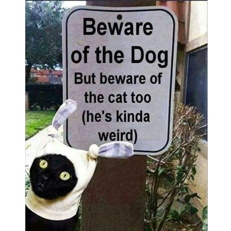 Cat - Beware of the Dog But beware of the cat too (he's kinda weird)