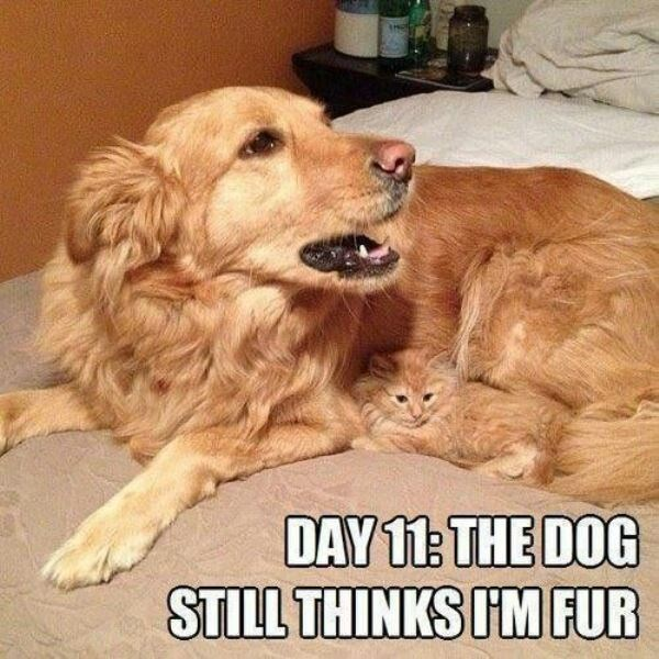 Dog - DAY 11: THE DOG STILL THINKS I'M FUR
