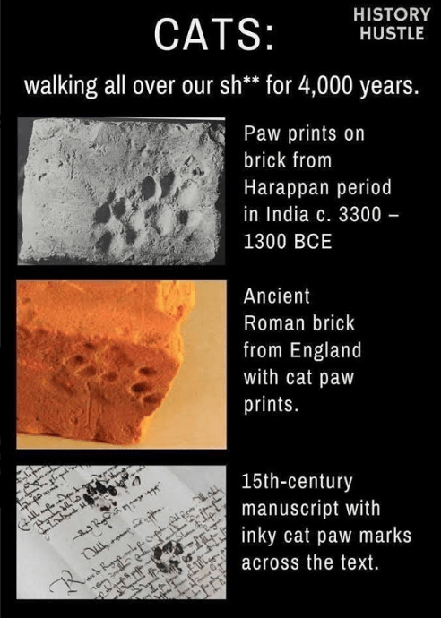 Text - HISTORY CATS: HUSTLE walking all over our sh** for 4,000 years. Paw prints on brick from Harappan period in India c. 3300 – 1300 BCE Ancient Roman brick from England with cat paw prints. 15th-century manuscript with inky cat paw marks across the text. R.
