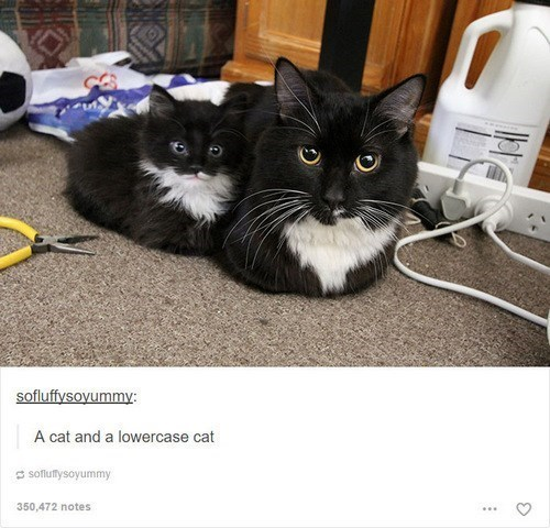 Cat - sofluffysoyummy: A cat and a lowercase cat S soflutfysoyummy 350,472 notes