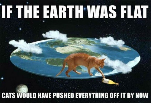 Organism - IF THE EARTH WAS FLAT CATS WOULD HAVE PUSHED EVERYTHING OFF IT BY NOW