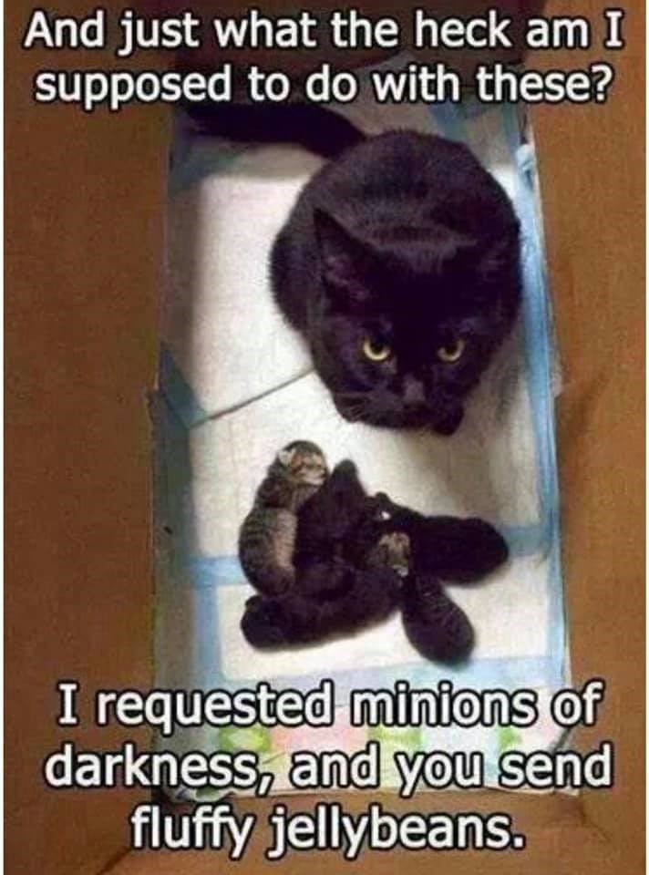 Photo caption - And just what the heck am I supposed to do with these? I requested minions of darkness, and you send fluffy jellybeans.