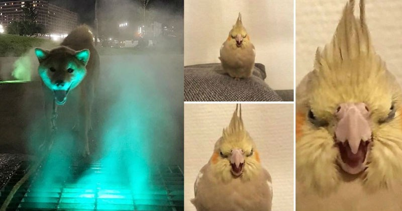 A collection of images showing animals that give off threatening auras.