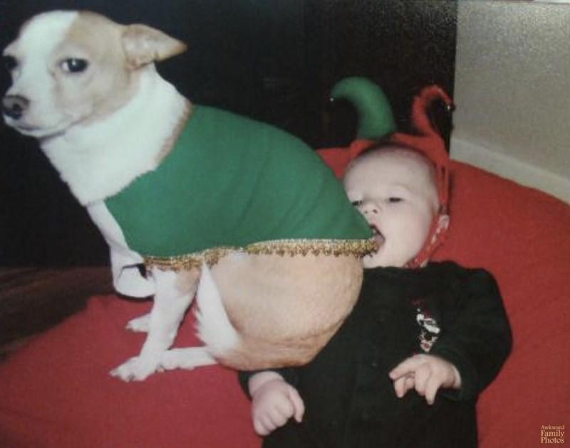 Dog breed - Awkward Family Photos