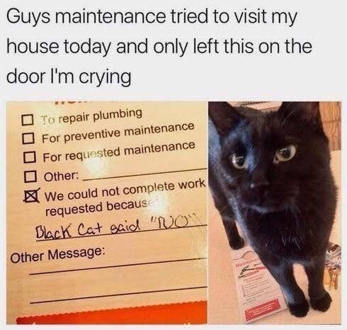 """Cat - Guys maintenance tried to visit my house today and only left this on the door I'm crying O To repair plumbing For preventive maintenance For requested maintenance Other: We could not complete work requested becaus Black Cat gaiod """"RO` Other Message:"""