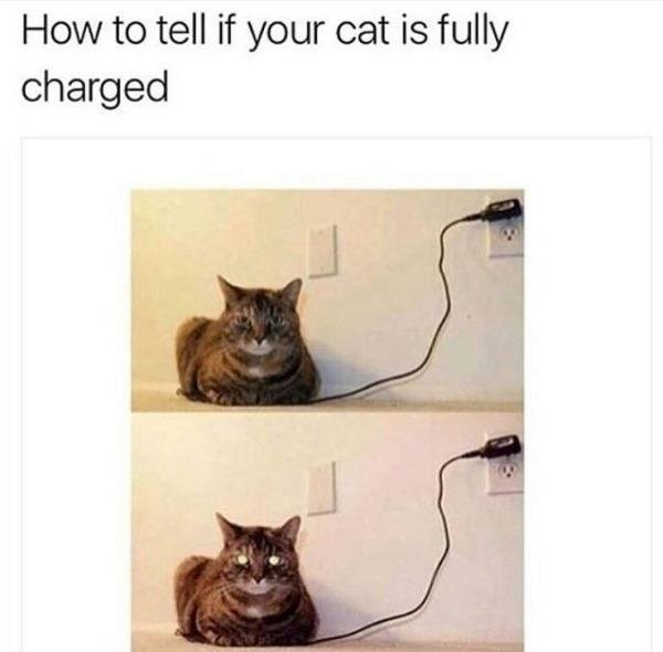 Cat - How to tell if your cat is fully charged