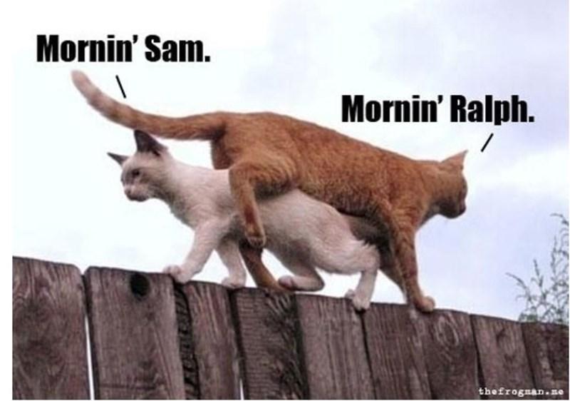 Mammal - Mornin' Sam. Mornin' Ralph. thefrognan.