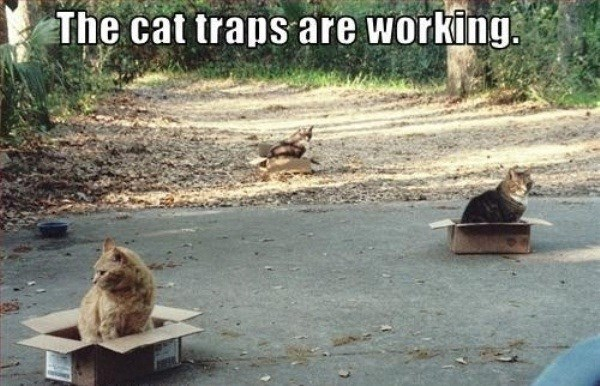 Adaptation - The cat traps are working.