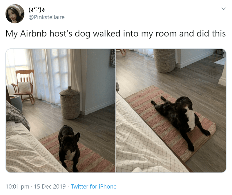 Product - @Pinkstellaire My Airbnb host's dog walked into my room and did this 10:01 pm · 15 Dec 2019 · Twitter for iPhone