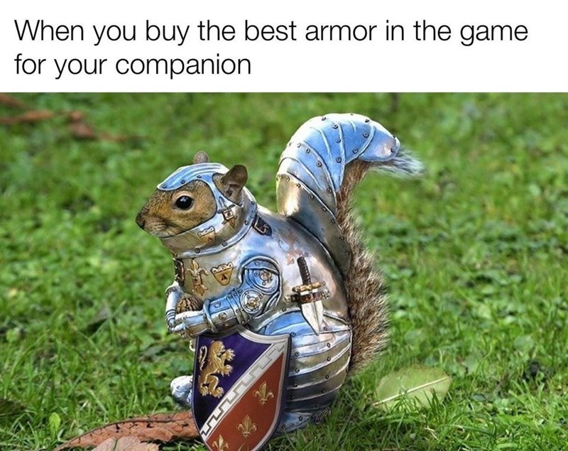 Squirrel - When you buy the best armor in the game for your companion