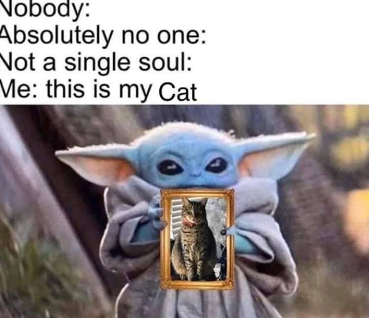 baby yoda holding a photo of a cat. nobody: absolutely no one: not a single soul: me: this is my cat