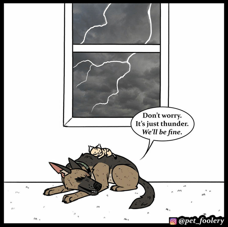 Cartoon - Don't worry. It's just thunder. We'll be fine. @pet_foolery