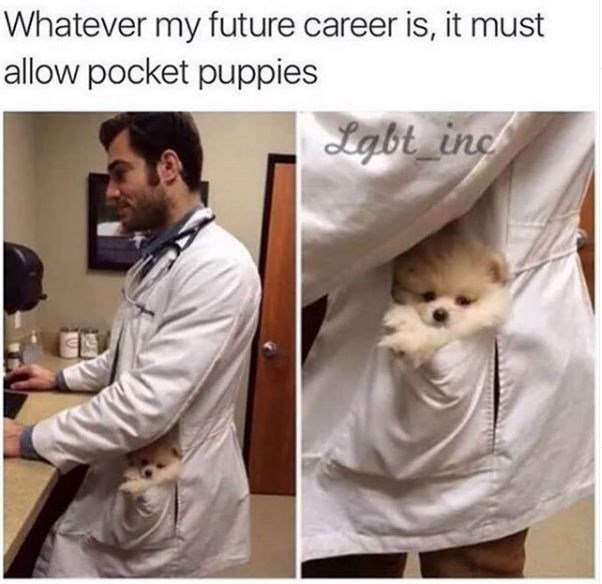 Text - Whatever my future career is, it must allow pocket puppies Lgbt_inc