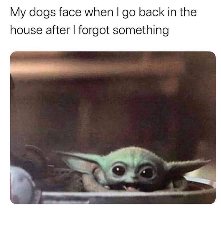 Snout - My dogs face when I go back in the house after I forgot something