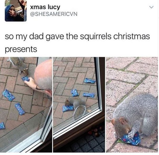 tweet with three pics showing a man leaving tiny wrapped presents outside and a squirrel looking between them and sticking its little nose inside one. so my dad gave the squirrels Christmas presents.