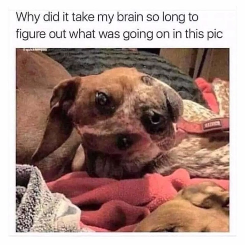 Dog - Why did it take my brain so long to figure out what was going on in this pic quicktempas