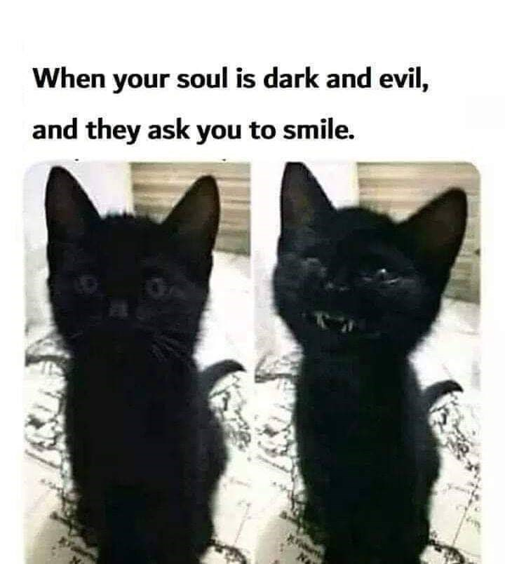 Cat - When your soul is dark and evil, and they ask you to smile. OA