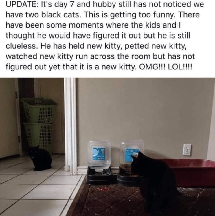 Property - UPDATE: It's day 7 and hubby still has not noticed we have two black cats. This is getting too funny. There have been some moments where the kids and I thought he would have figured it out but he is still clueless. He has held new kitty, petted new kitty, watched new kitty run across the room but has not figured out yet that it is a new kitty. OMG!!! LOL!!!!
