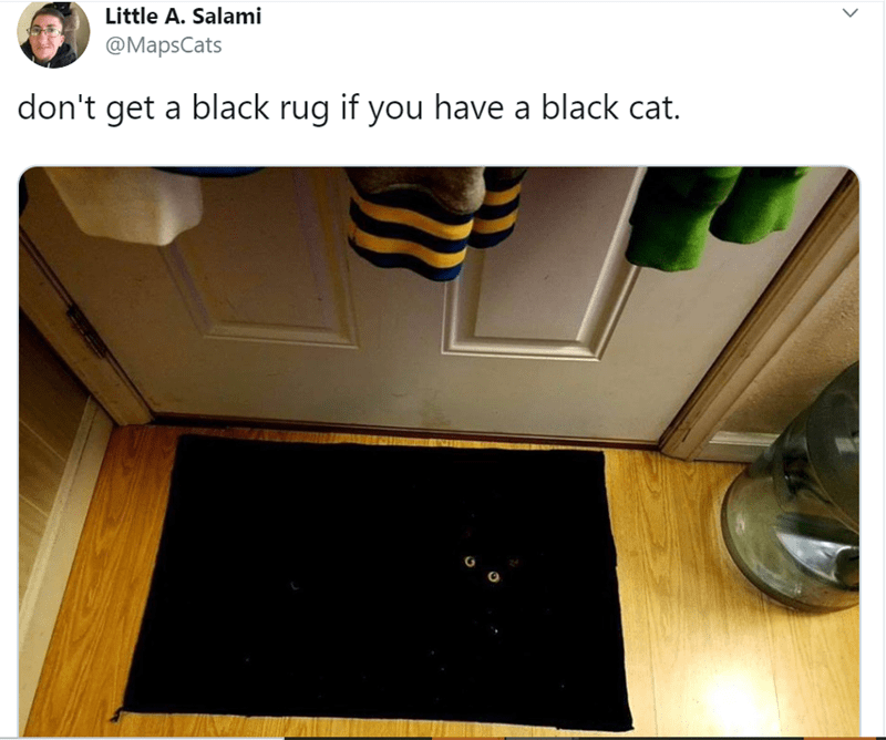 Yellow - Little A. Salami @MapsCats don't get a black rug if you have a black cat.