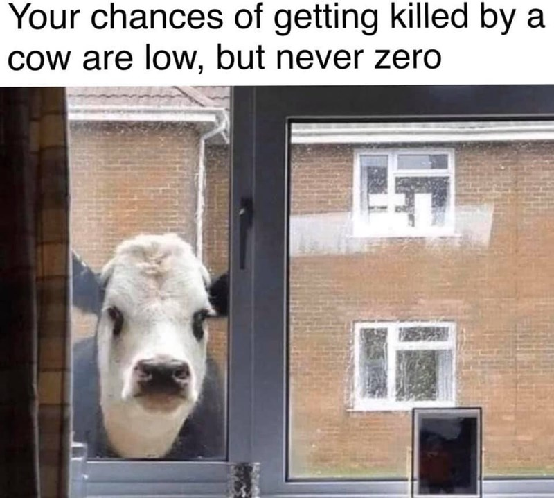 "Funny meme that reads, ""Your chances of getting killed by a cow are low, but never zero"" above a photo of a cow looking in through a window"