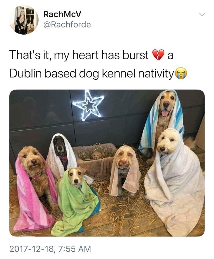 Dog - RachMcV @Rachforde That's it, my heart has burst V a Dublin based dog kennel nativity 2017-12-18, 7:55 AM