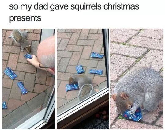 Adaptation - so my dad gave squirrels christmas presents