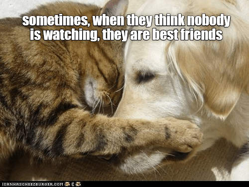 Canidae - sometimes, when they think nobody is watching, they are best friends ICANHASCHEEZBURGER.COM E