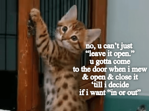 """Cat - no, u can't just """"leave it open."""" u gotta come to the door when i mew & open & close it till i decide if i want """"in or out"""""""