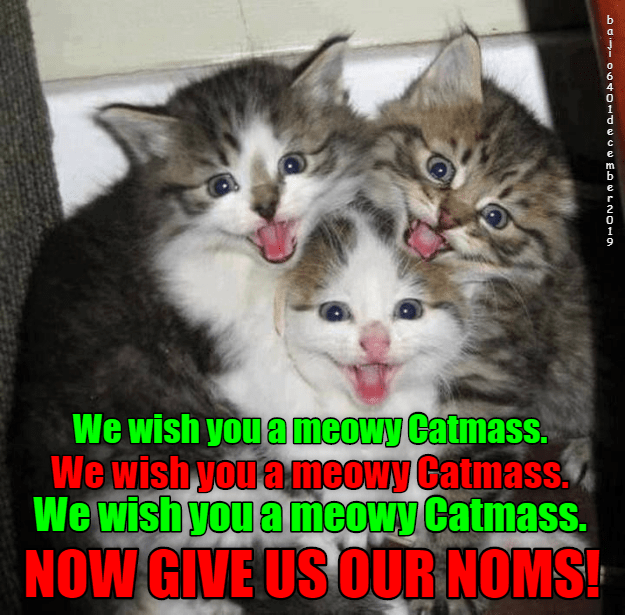 Cat - We wish you a meowy Catmass. We wishyou ameowy Catmass. We wish you a meowy Catmass. NOW GIVE US OUR NOMS!
