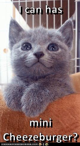 Cat - I can has mini Cheezeburger? ICANHASCHEEZBURGER.COM