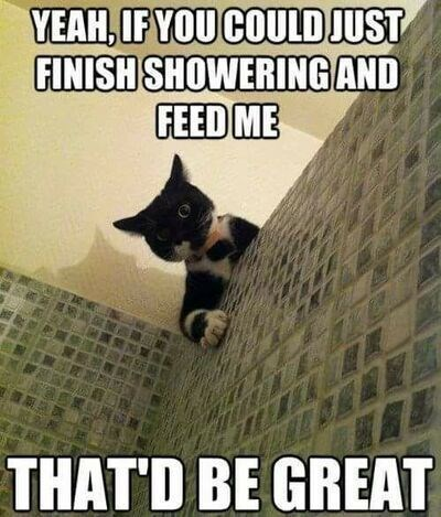 Cat - YEAH, IF YOU COULD JUST FINISH SHOWERING AND FEED ME THAT'D BE GREAT