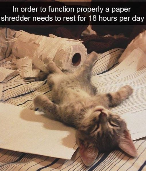 Cat - In order to function properly a paper shredder needs to rest for 18 hours per day