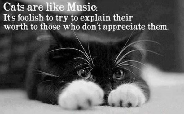Cat - Cats are like Music: It's foolish to try to explain their worth to those who don't appreciate them.