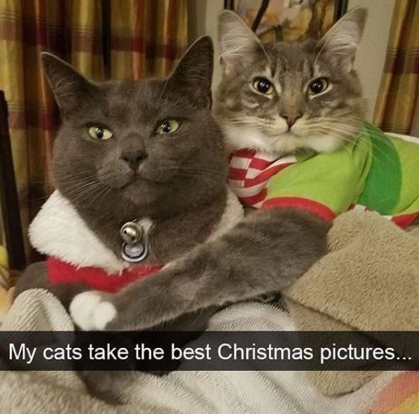 Cat - My cats take the best Christmas pictures...