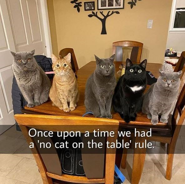 Cat - Once upon a time we had a 'no cat on the table' rule.