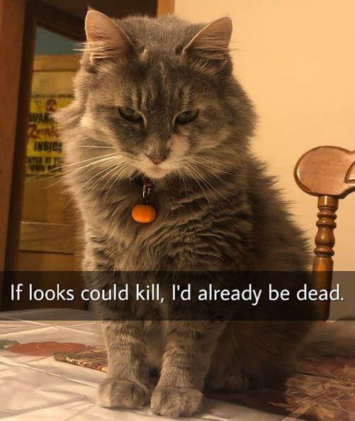 Cat - WAR INSID If looks could kill, I'd already be dead.