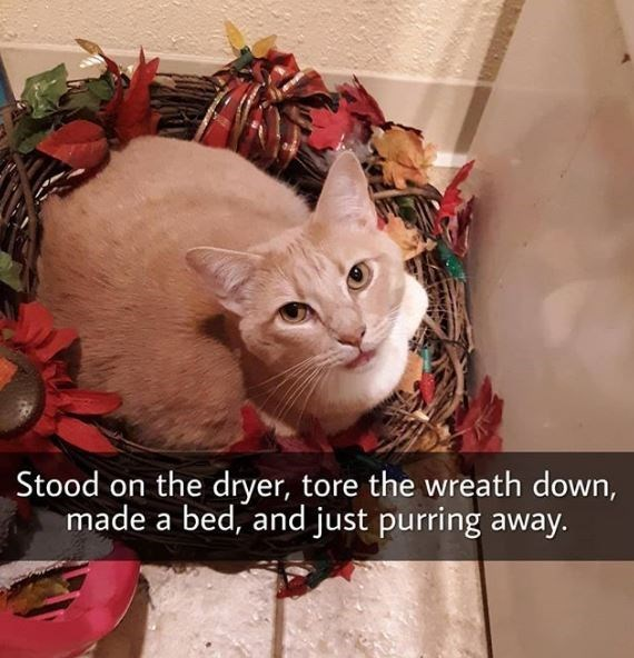 Cat - Stood on the dryer, tore the wreath down, made a bed, and just purring away.