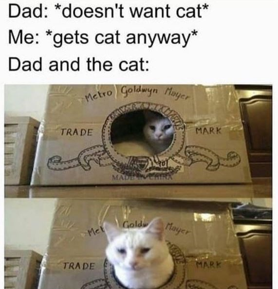 Cat - Dad: *doesn't want cat* Me: *gets cat anyway* Dad and the cat: Metro Goldwyn tnyer TRADE MARK MADE Gold rHayer Met Met TRADE MARK