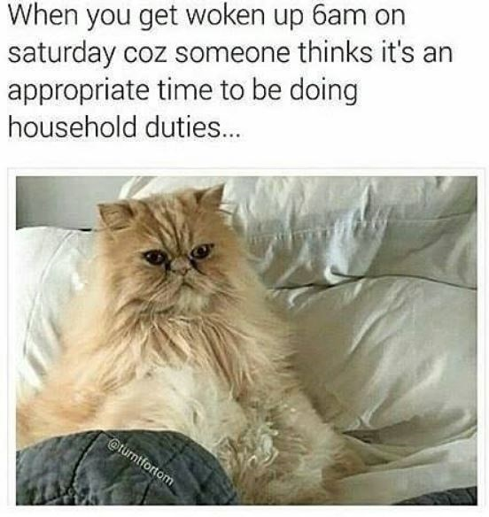 Cat - When you get woken up 6am on saturday coz someone thinks it's an appropriate time to be doing household duties.. @turntfortom