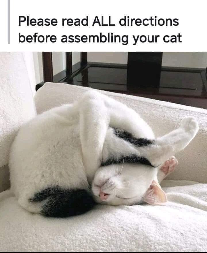 Cat - Please read ALL directions before assembling your cat